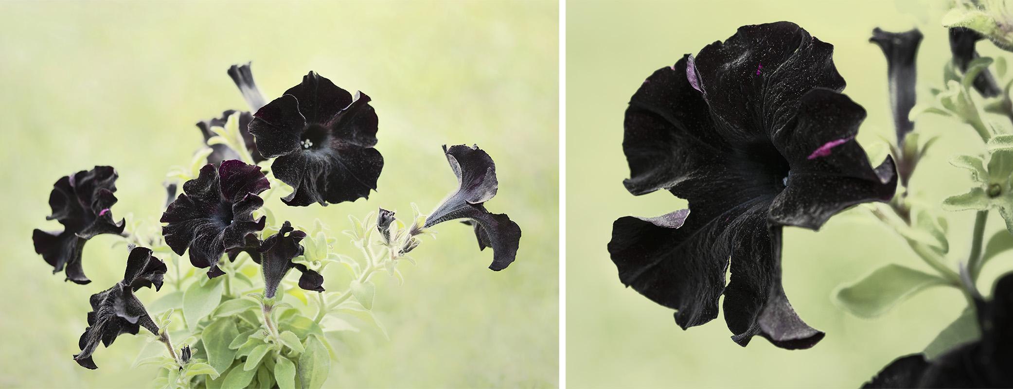 Simple Flower Photography Technique
